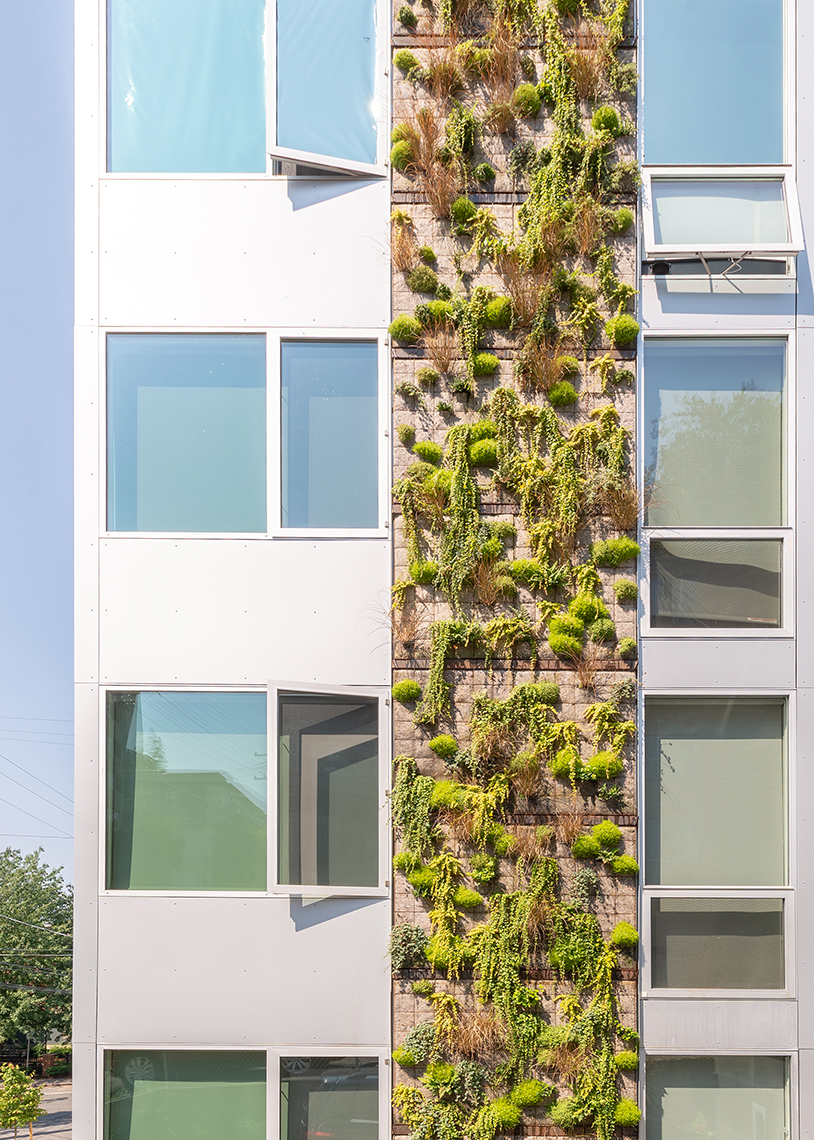 Build LLC 602 Flats living wall, © Andrew van Leeuwen